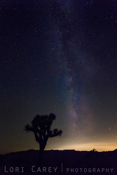 Joshua Tree silhouette and Milky Way, Joshua Tree National Park