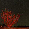 Ocotillo Star Trails