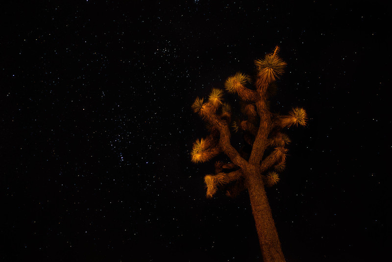 Orion at Joshua Tree