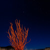 Ocotillo Orange