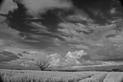 Shropshire Praire