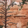 Bryce Canyon, Utah (2008) Original Fine Art Documentary Photograph by Michel Botman © north49exposure.com