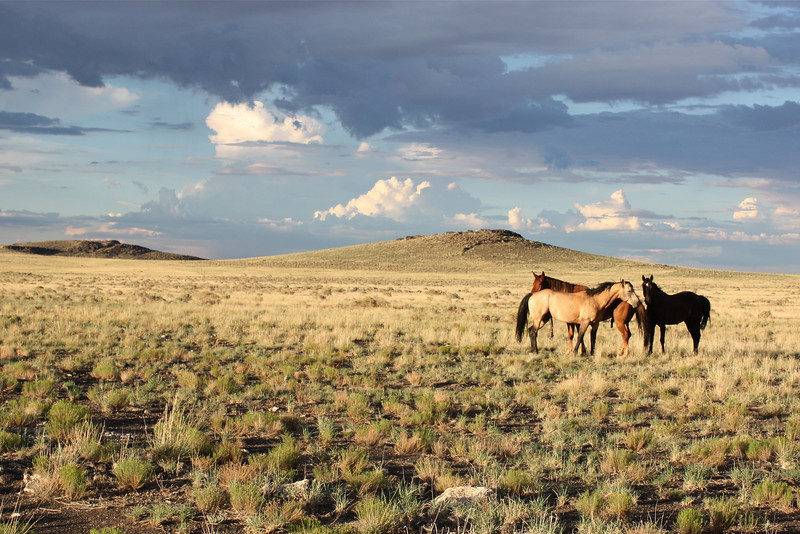 Wild horses on the road to Kanab (2008) © Copyrights Michel Botman Photography