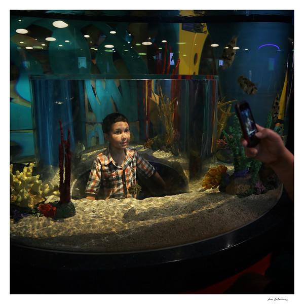 Toronto Aquarium, 2014. © Michel Botman Photography