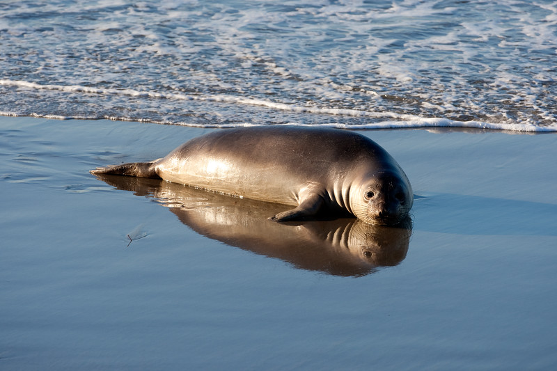 Reflection of Seal