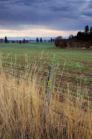 Winter Wheat - Goldendale, WA