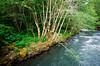 Cispus River, WA