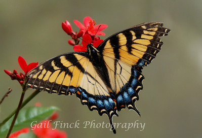 BUTTERFLY GARDEN - A lovely collection of butterflies, all native to Florida