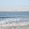 Seagulls flying over sunlit water - Tybee Island, GA