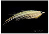 yellow flat wing streamer