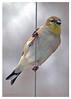 402 Bird on a Wire