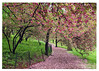 106-Spring-is-Here-card