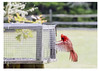 440-Cardinal-at-the-feeder-web