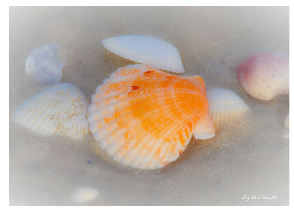 121-colorful-shell