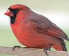 412 Cardinal