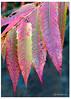 301 Fall colors