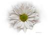 304 White Bloom