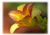 319 yellow flower proof