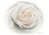 343 Beauty of White