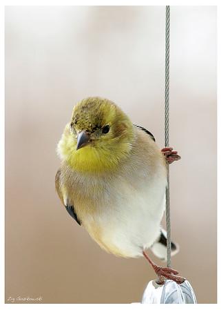 402 Bird on a wire2