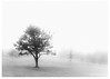 170-Tree-in-the-Mist