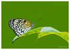 397-late-season-butterfly-card