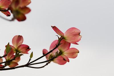 Spring flowers. Wayne, PA.