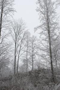 Winter scene. St. Cergue, Switzerland.
