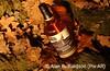 Grouse Oak AR