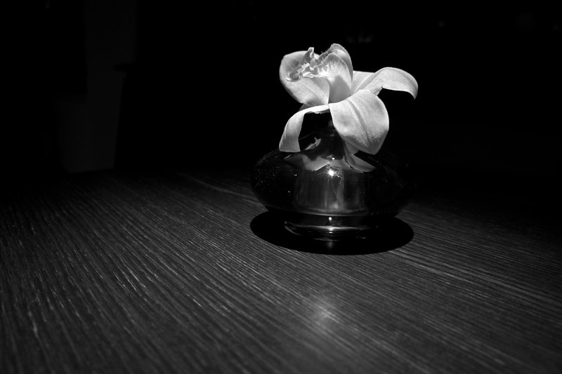 Single Flower in Black and White - Austin, Texas