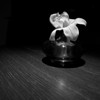 Single Flower in Black and White - Austin, Texas