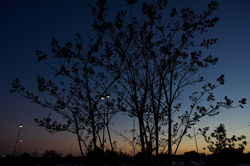 Trees Silhouette at Sunset - Austin, Texas