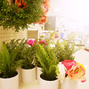 Sunshine and Target Plastic Plants - Austin, Texas