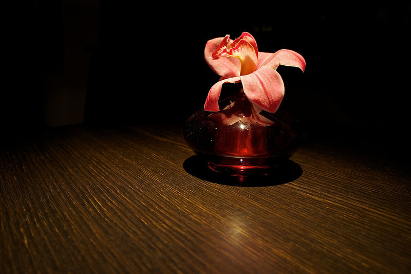 Single Flower - Austin, Texas