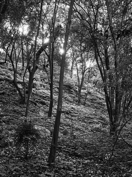 Mini Forest - Austin, Texas