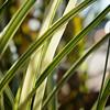 Grass Bokeh - Austin, Texas