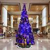 Christmas Tree, Taj Bangalore - Bangalore, India