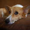Lucky on Dog Bed - Austin, Texas