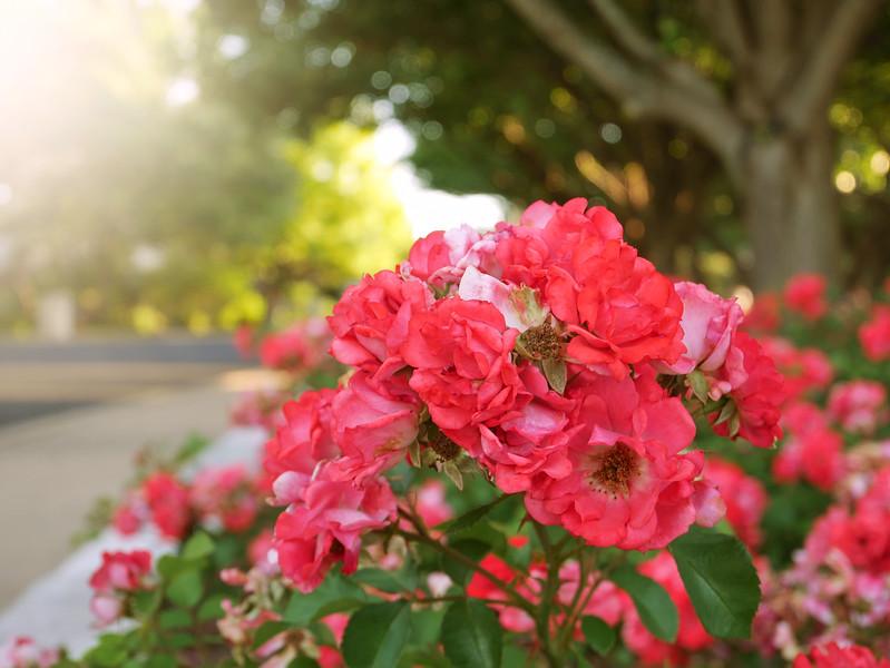 Pretty Flowers and Sunshine - Austin, Texas