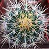 Supermarket Cactus - Austin, Texas