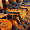 Violin Necks in Formation - Austin, Texas