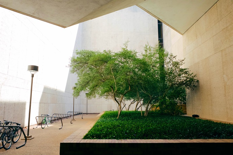 Nature Band-aid, University of Texas - Austin, Texas