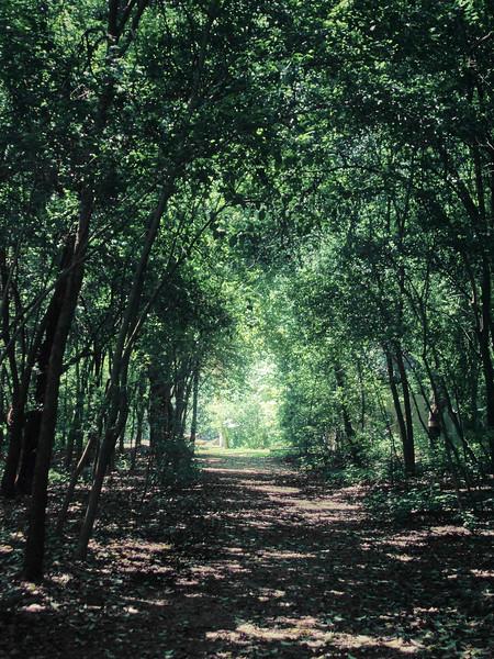 Enchanted Forest - Austin, Texas