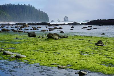 Green Tide
