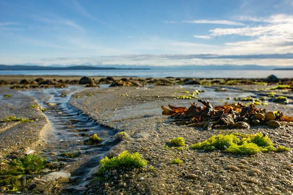Sunshine Coast Seaweed