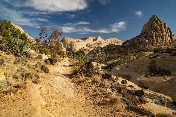 Desert Tower Trail