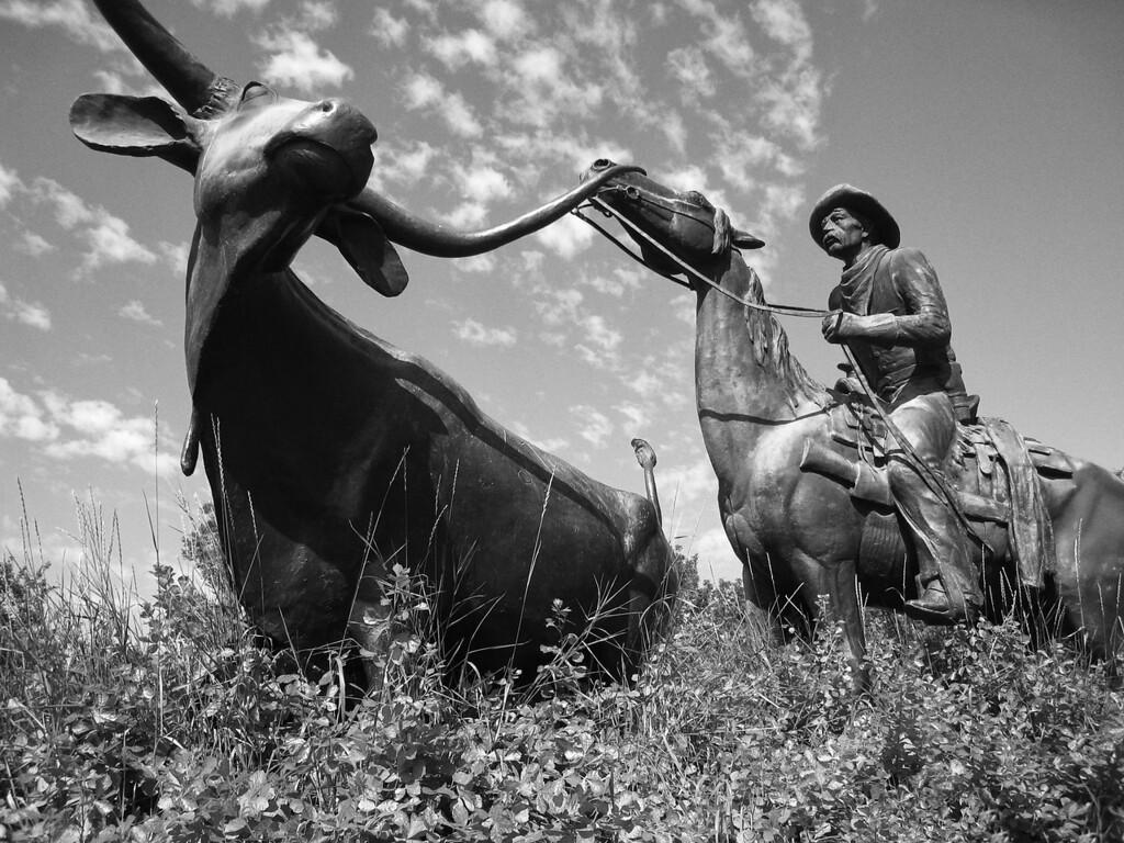 Cowpoke and Steer