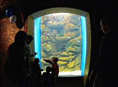 A Family Enjoying the Cleveland Aquarium