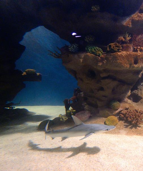 A Shark and his Shadow at the Cleveland Aquarium