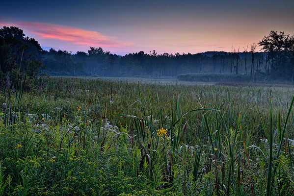 Early morning at the Beaver Marsh
